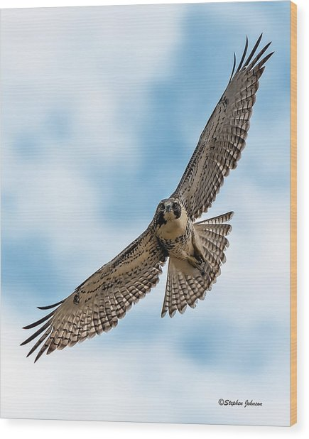 Red-tailed Hawk Coming At Me Wood Print