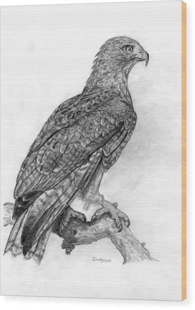 Red Tailed Hawk Wood Print by Cynthia  Lanka