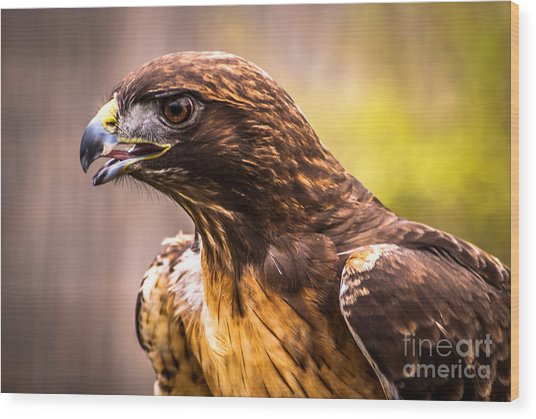 Red Tailed Hawk Profile Wood Print