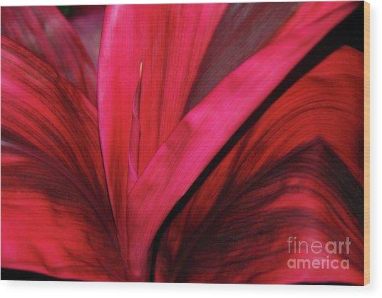 Red Ti Leaf Plant - Hawaii Wood Print