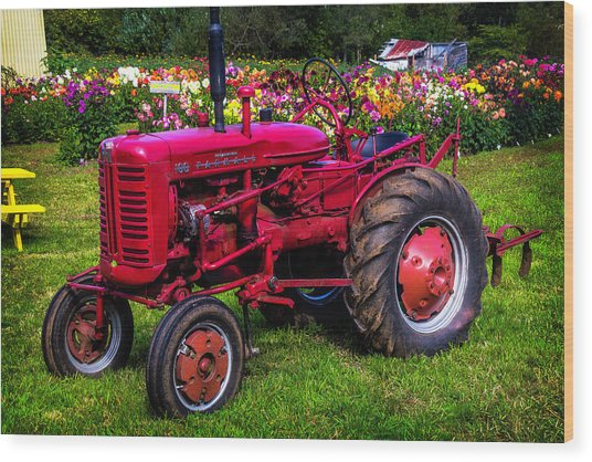 Red Tractor Dahlia Gardens Wood Print