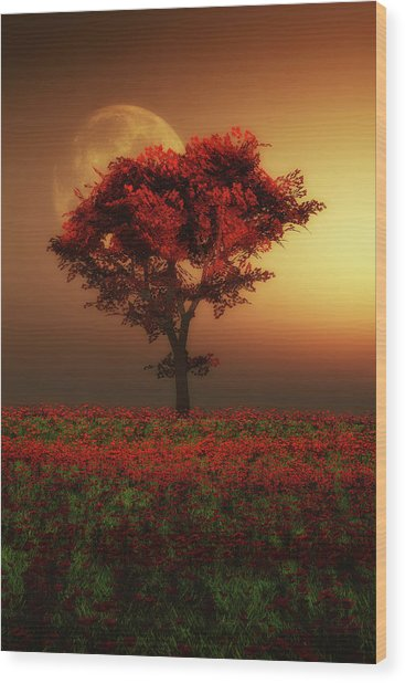 Red Tree In The Evening Wood Print