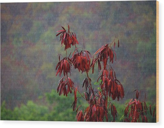 Red Tree In The Rain Wood Print
