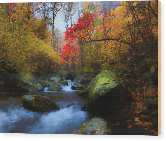 Red Tree In White Oak Canyon Wood Print
