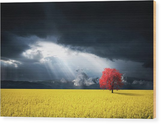 Red Tree On Canola Meadow Wood Print