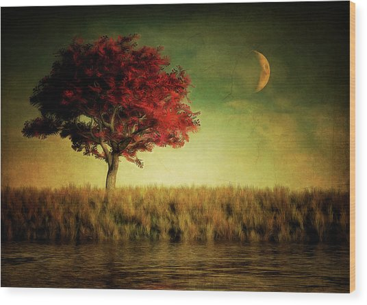 Red Tree With Moonrise Wood Print
