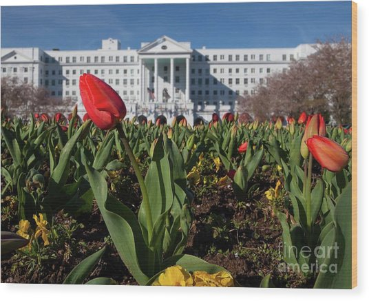 Red Tulip At The Greenbrier Wood Print