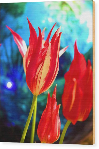 Red Tulip With Blue Ball Wood Print