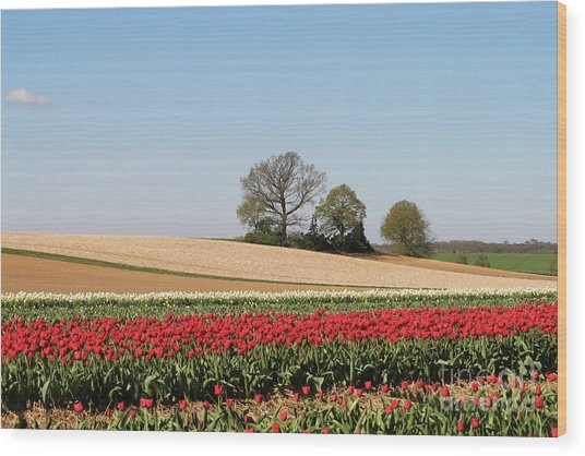 Red Tulips Landscape Wood Print