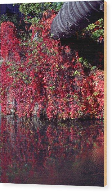 Red Waste Wood Print by Jez C Self