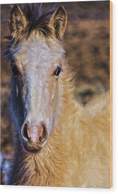 Red Willow Pony Wood Print
