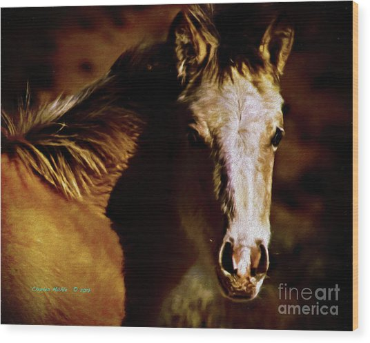 Red Willow Pony Lx Wood Print