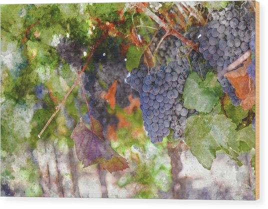 Red Wine Grapes On The Vine In Wine Country Wood Print