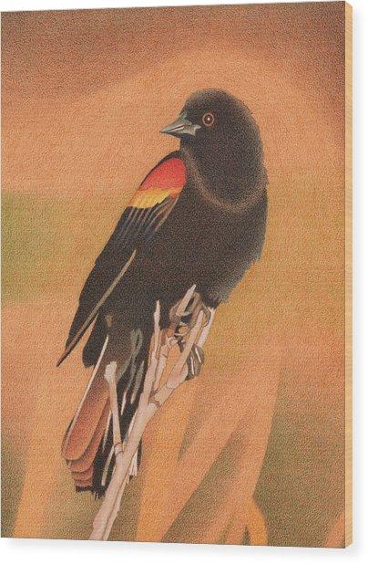 Red-winged Blackbird 3 Wood Print