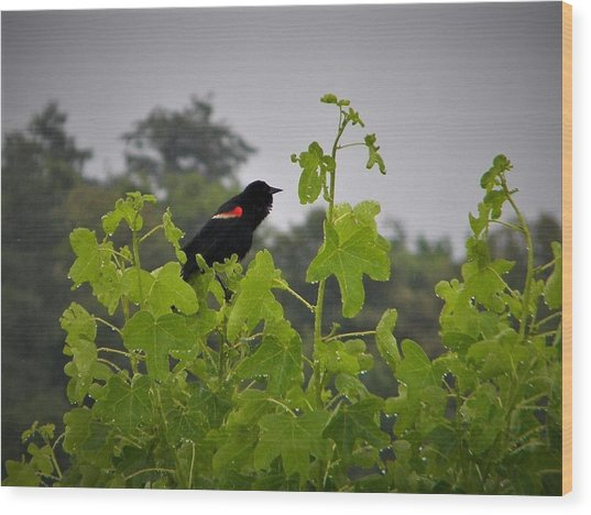 Red Winged Blackbird In The Rain Wood Print