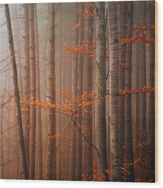 Red Wood Wood Print