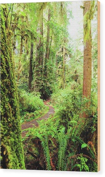 Red Woods Trail Wood Print