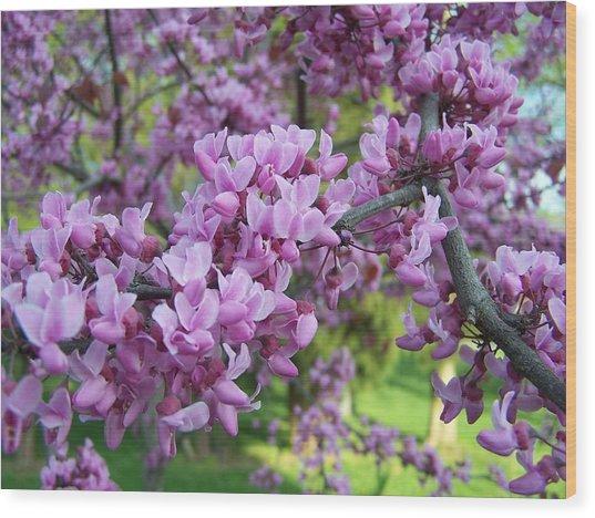Redbud Purple Pansy Wood Print by Sandy Collier