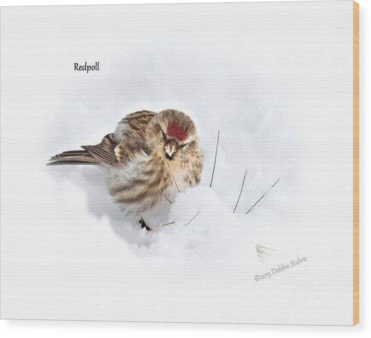 Redpoll Wood Print