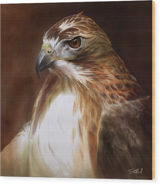 Redtailed Hawk Portrait Wood Print