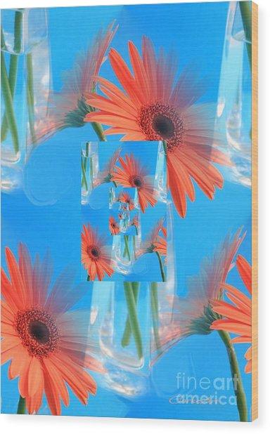 Redundant Gerbera Daisy Wood Print