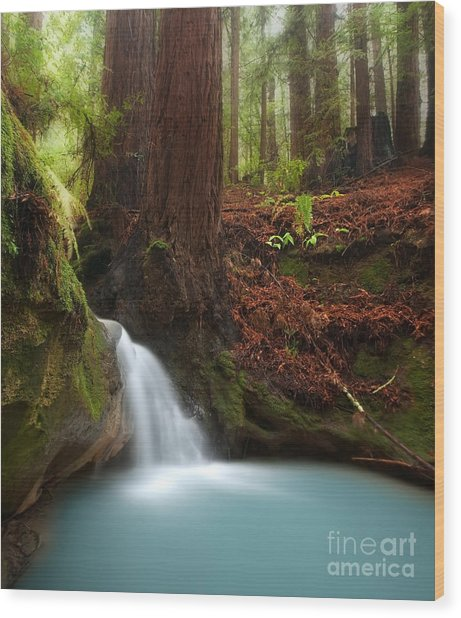 Redwood Forest Waterfall Wood Print