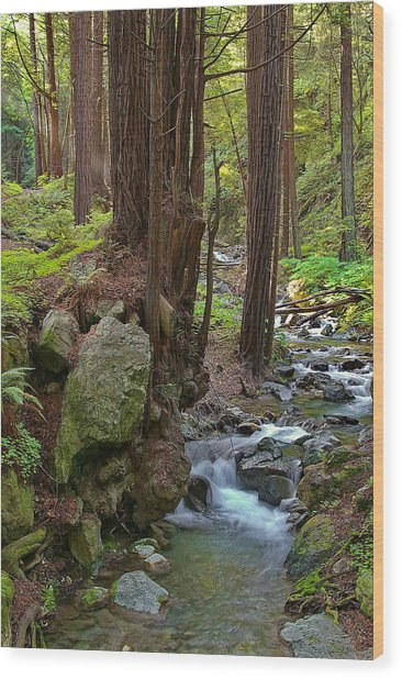 Redwood Stream Wood Print by Arthurpete Ellison