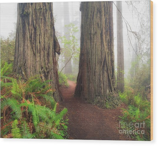 Redwood Trail Wood Print