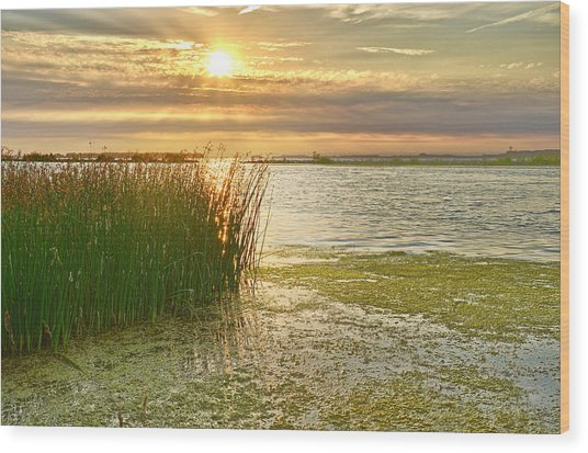 Reeds In The Sunset Wood Print
