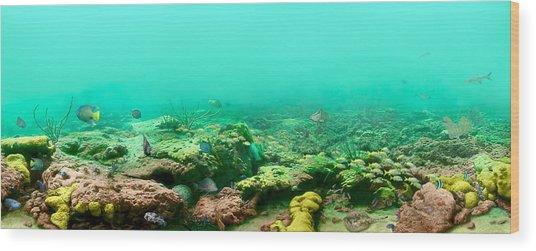 Reef Life Wood Print by Owen Caddy