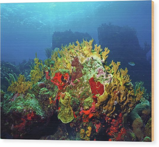 Reef Scene With Divers Bubbles Wood Print