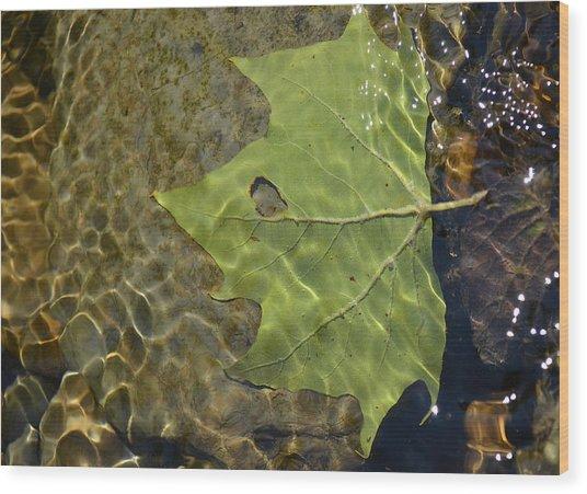 Reflected Indignation Wood Print