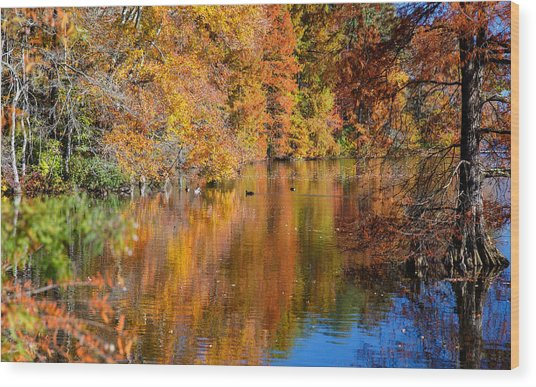 Reflected Fall Foliage Wood Print