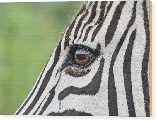Reflection In A Zebra Eye Wood Print