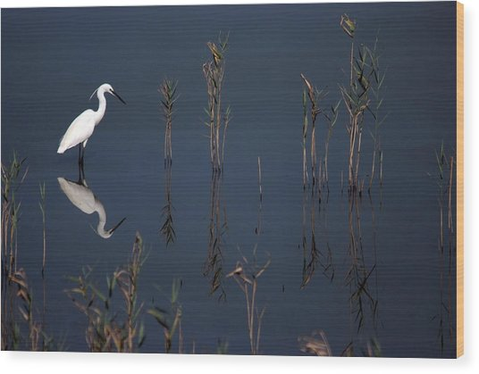 Reflection Of Little Egret In Lake Wood Print