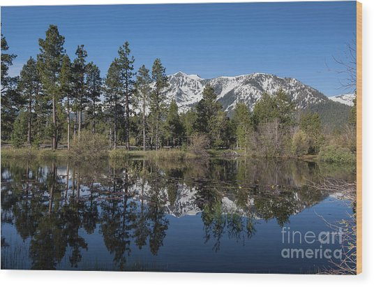 Reflection Of Mount Tallac Wood Print by Webb Canepa