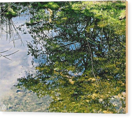 Reflection Pool Wood Print by Debra     Vatalaro