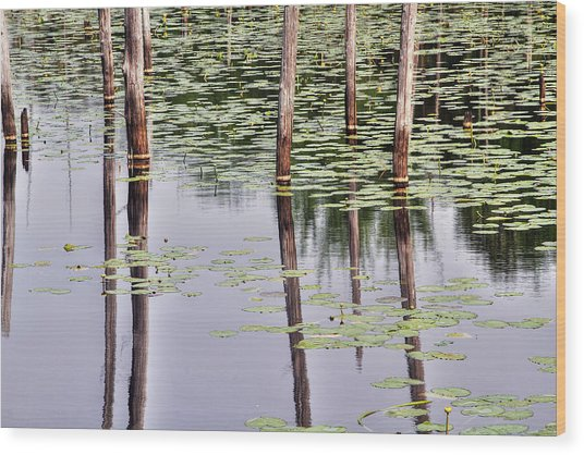 Reflections Of Franklin Parker Wood Print