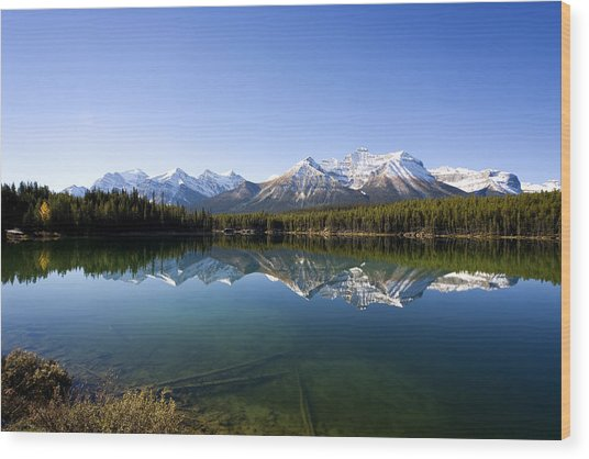 Reflections Wood Print by Richard Steinberger