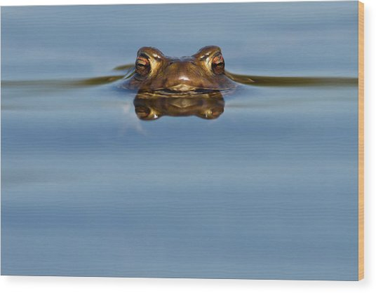 Reflections - Toad In A Lake Wood Print