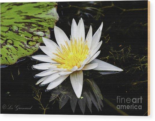 Reflective Lily Wood Print