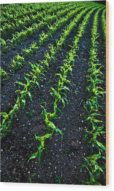 Regimented Corn Wood Print