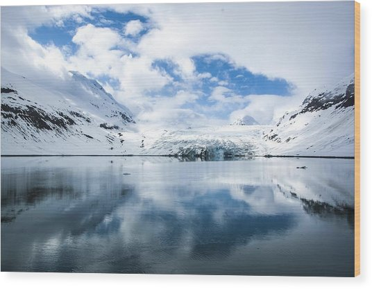 Reid Glacier Glacier Bay National Park Wood Print
