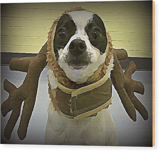 Reindeer Dog Wood Print