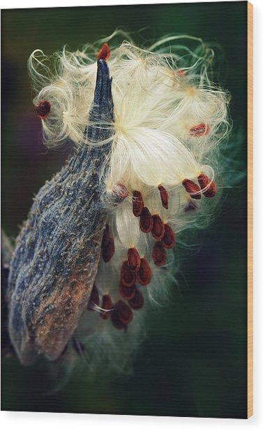 Release The Seed Milkweed Wood Print