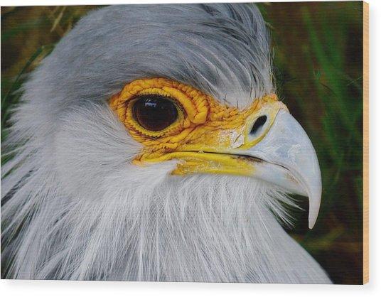 Reptile Hunter - Secretary Bird Wood Print
