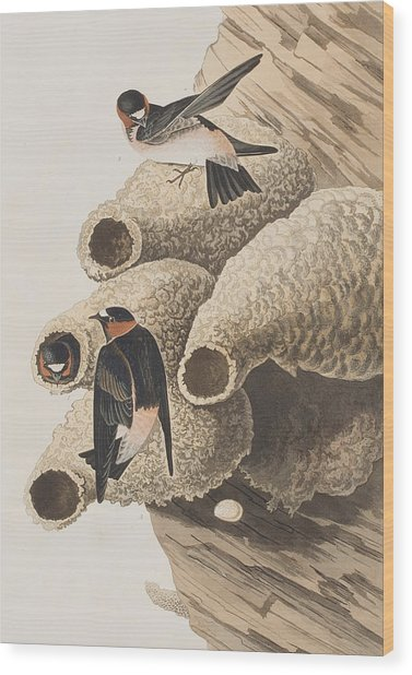 Republican Or Cliff Swallow Wood Print