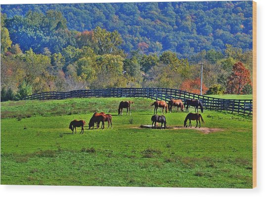Rescue Horses Wood Print