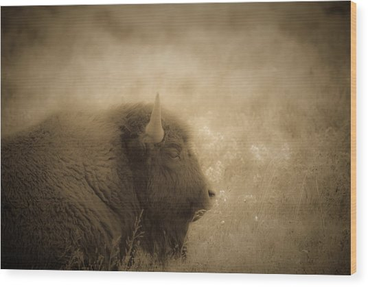 Resting Buffalo Wood Print by Patrick  Flynn