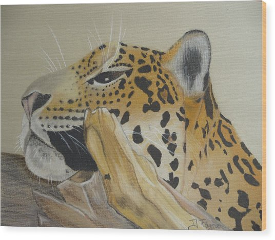 Resting Leopard Wood Print by Debbie Payne